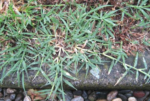 L 39 orto dei colori le infestanti - Diversi tipi di erba ...