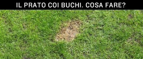 I buchi sul prato poi ricrescono ricresce l 39 erba sulle - Cosa mettere al posto dell erba in giardino ...