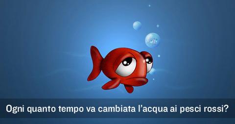 Ogni quanto va cambiata l 39 acqua ai pesci rossi si cambia for Quanto vivono i pesci rossi