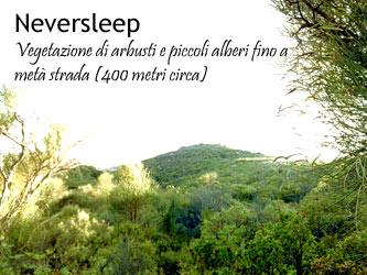 La vegetazione fino a 400 metri di altezza sullo Stromboli.